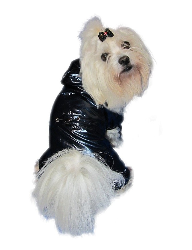 Rain coat on 4 legs - Metalic blue